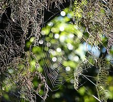 Cobwebs in the moss by PhotosByG