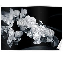 Orchids in Monochrome Poster