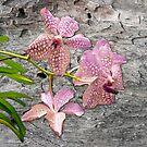 Purple Vanda hybrid on Wood by Leonie Mac Lean