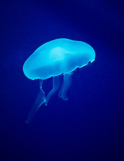 Glowing Blue Jellyfish by Peta Thames