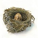 Wren Nest and egg by thedrawingroom