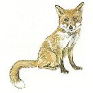 Red Fox by thedrawingroom