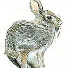 Wild Rabbit by thedrawingroom