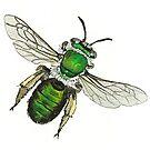 Green Burrowing Bee by thedrawingroom