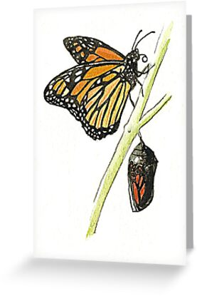 Monarch Butterfly with pupa by thedrawingroom