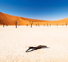 Dead Vlei, Namibia by Justin Foulkes