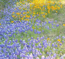 Bluebonnets and Coreopsis by Navigator