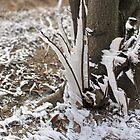 winter storm      by mrivserg