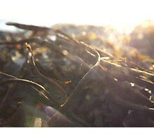 Seaweed and Sunshine Photographic Print