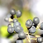 Under the Berries by aprilann