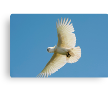 High Flyer - white cockatoo Canvas Print