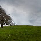 Isolated Tree by joannegrist89