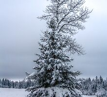 Winter Trees I by EelhsaM