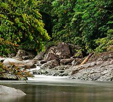 Up The Creek - Mossman Gorge by Jenny Dean