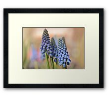 Ringing in Spring Framed Print