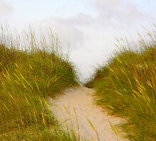 Sandy Path by K. Abraham