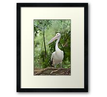 A wonderful bird is the Pelican.... Framed Print