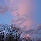 The Soft Skies of Alabama by Vivian Eagleson