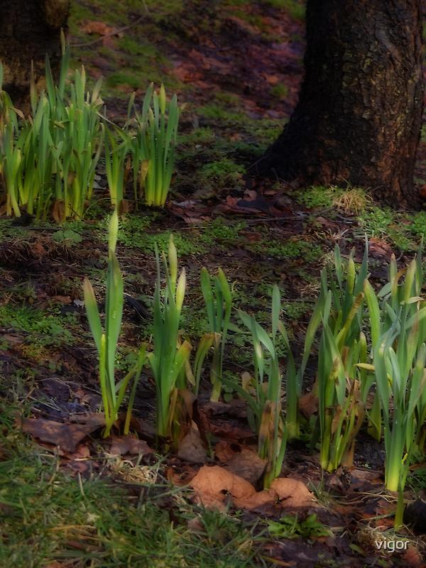 The beginnings of spring by vigor