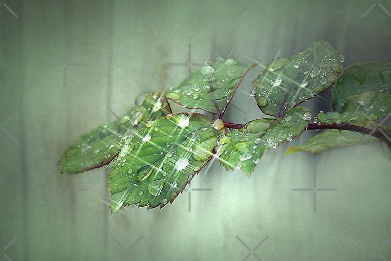 Dew Drop Sparkle by CarolM