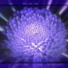 Lovely Lavender by AnnDixon