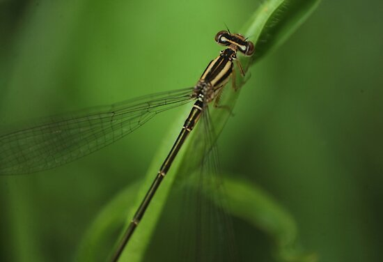 A delicate damsel in green by Graeme Mockler