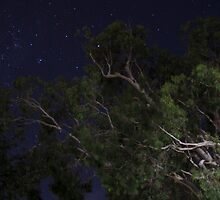 star light gum tree by outbacksnaps