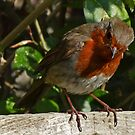 Cheekie Robin 2 by George Crawford