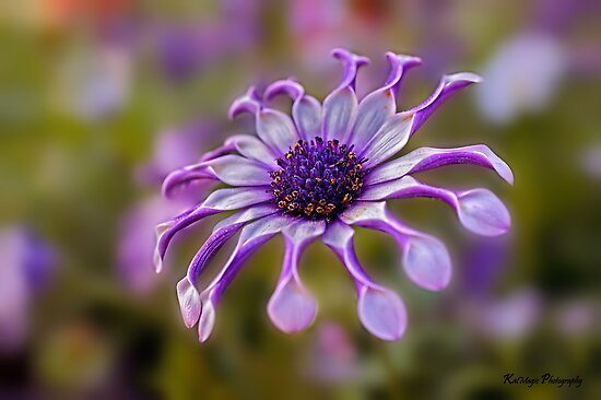 Purple Power by KatMagic Photography