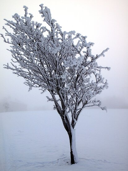 Frozen Tree, Northern Ireland by Ludwig Wagner