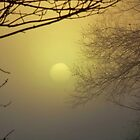 Fog Bound Sunset II by Kathleen M. Daley