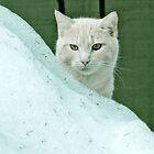 Cat in the snow by Greg  Walker