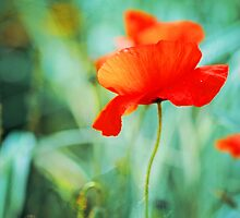 Dancing Poppy by Marc Loret