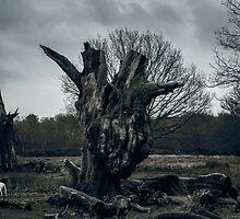 natura morta by edozollo