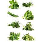 Herbs by Elizabeth Coats