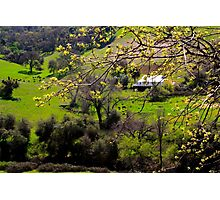Foothill Spring Photographic Print