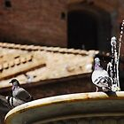 Pigeons on Water Fountain by jojobob