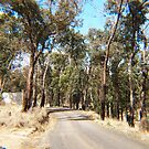 South Mountain Road, Wallan  VIC  Australia by Margaret Morgan (Watkins)