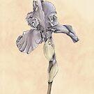 Iris Botanical Print by cathy savels
