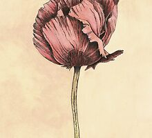 Poppy Botanical Print by cathy savels