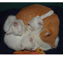 Basket of Cats Photographic Print