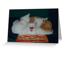 Kittens in Basket with Uncle Vlad Greeting Card