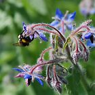 Bees and Borage by jojobob