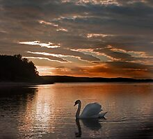 Sunset Swan by George Crawford