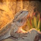 Bearded Dragon by Bob Hardy