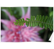 The story of the Fern and the Bromeliad  Poster