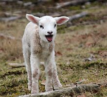 It is Spring - Welcome Little Lamb by Jo Nijenhuis