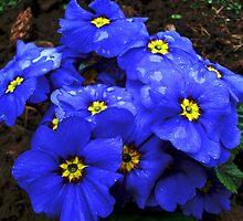 Beautiful blue by Ana Belaj