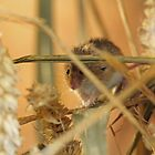 harvest mouse by Martynb