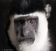 Monkey tales by John44